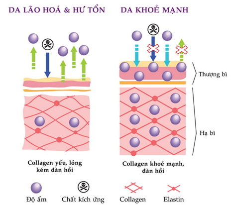 mat-na-collagen-1